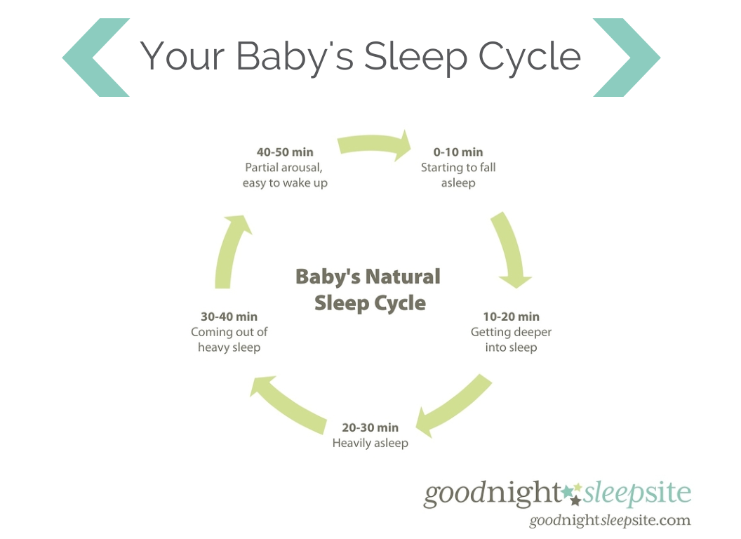 Baby's Sleep Cycle