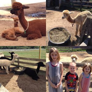 Fun Things For Kids To Do In Martha's Vineyard Part 2